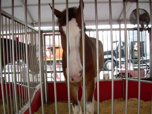 Clydesdale_in_Jail_by_Zsantz