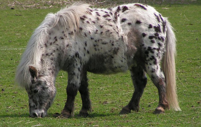 Equine Metabolic Syndrome & Equine Cushing's Disease: What's the Difference?