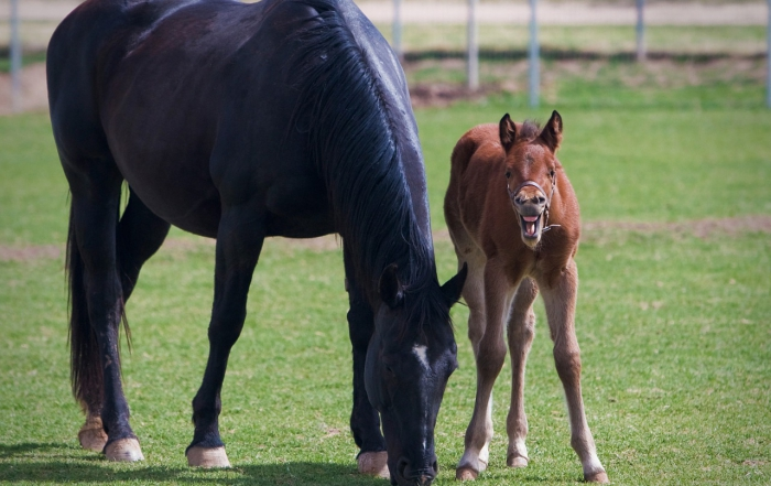Does Your Young Horse Need a Dental Exam?