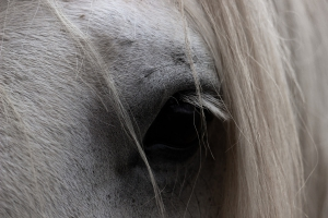 horse-943771_1920
