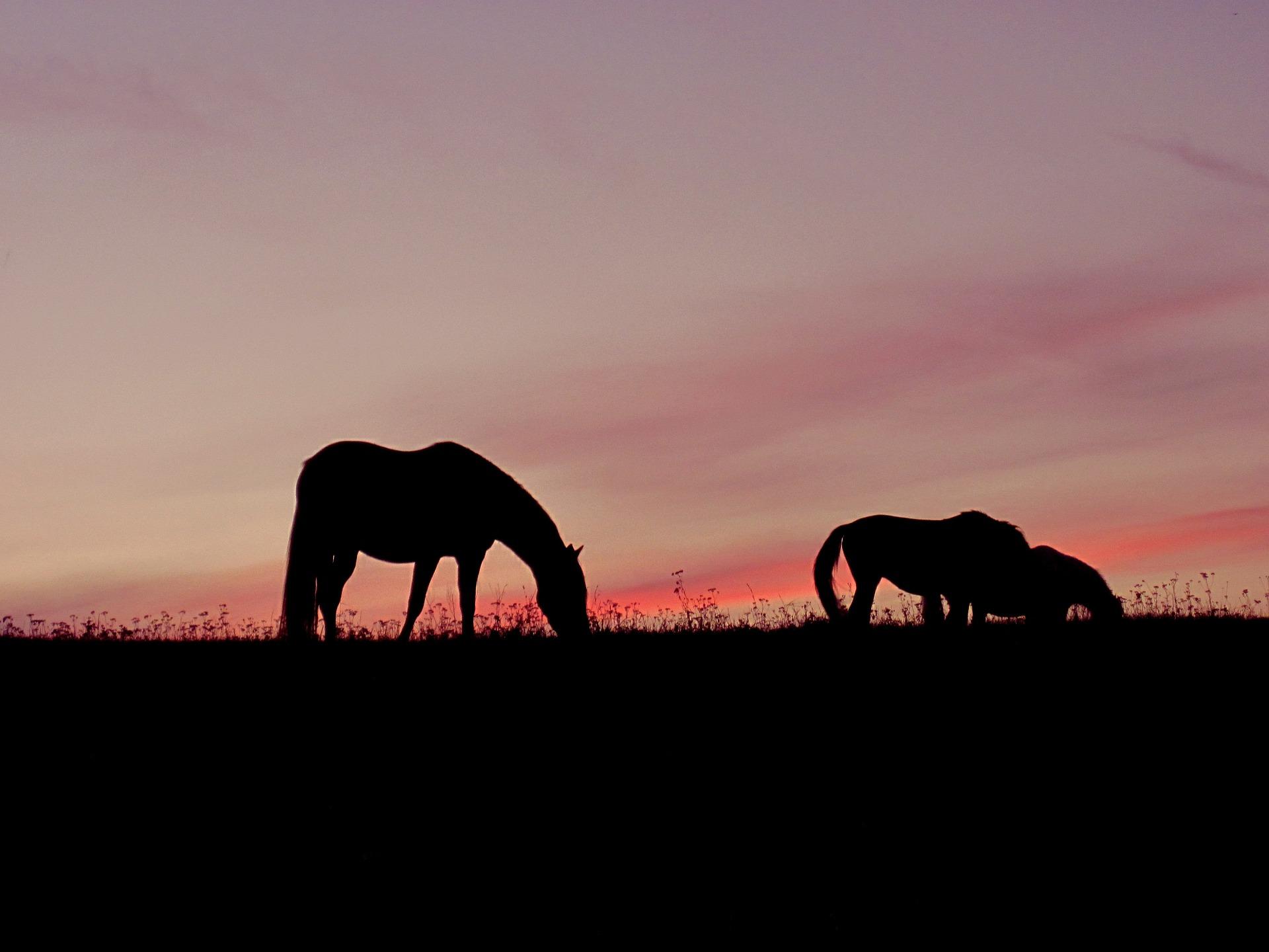 horses-921975_1920