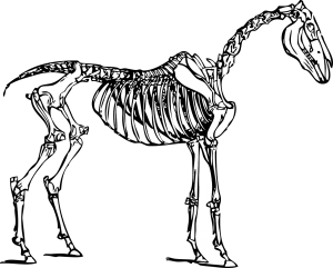 horse-30760_1280