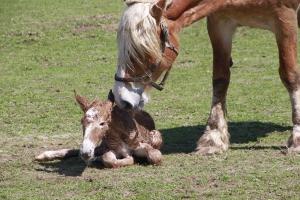 NewbornFoal
