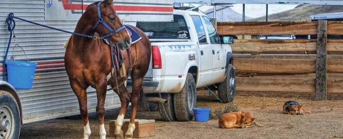 horseandtrailer