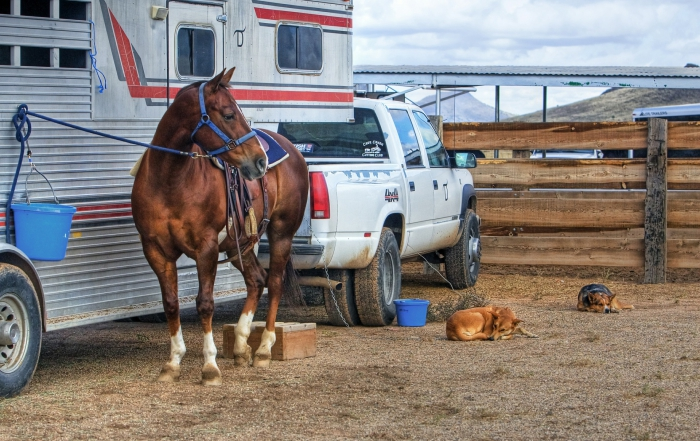 Management of the horse with Equine Gastric Ulcer Syndrome (EGUS)
