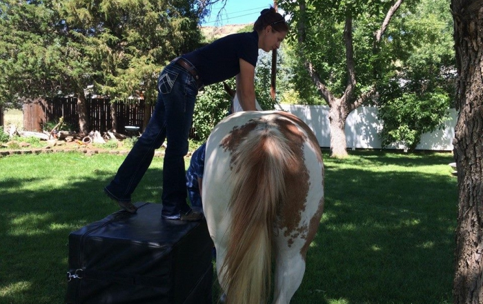 Chiropractic Case Study: 16 year old Quarter Horse with Arthritic Hocks