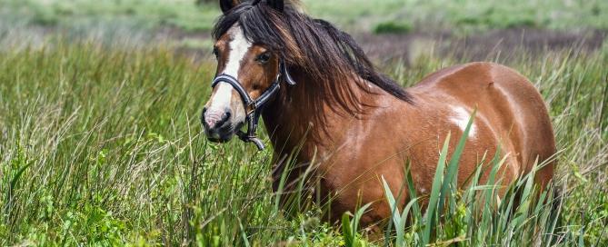 pony-2472424_1920