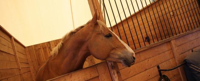 horse-stall