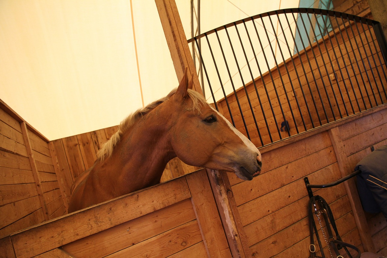 horse-stall