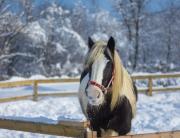 horse-2115557_1920