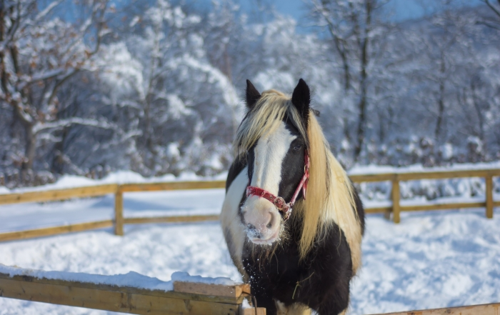 Blanketing Your Horse: Deciphering the Puzzle