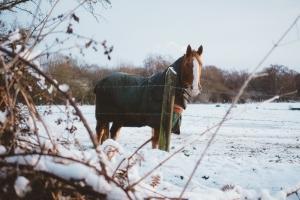 horse-2591138_1920