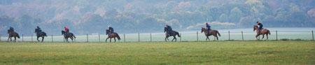 Social distancing horses